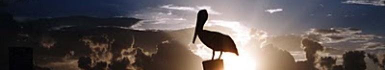 Pelican Ponderings